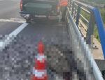 nehoda, diviak, diaľnica
