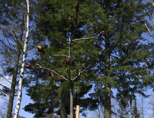 Na snímke jeden z vysadených stromčekov.